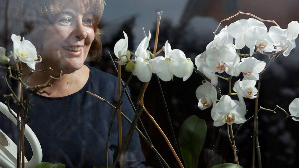 Orchideen pflegen: Das sind die besten Tipps - Foto: joste_dj/iStock