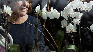 Orchideen richtig pflegen