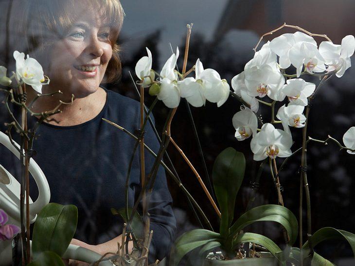 Orchideen pflegen: Das sind die besten Tipps