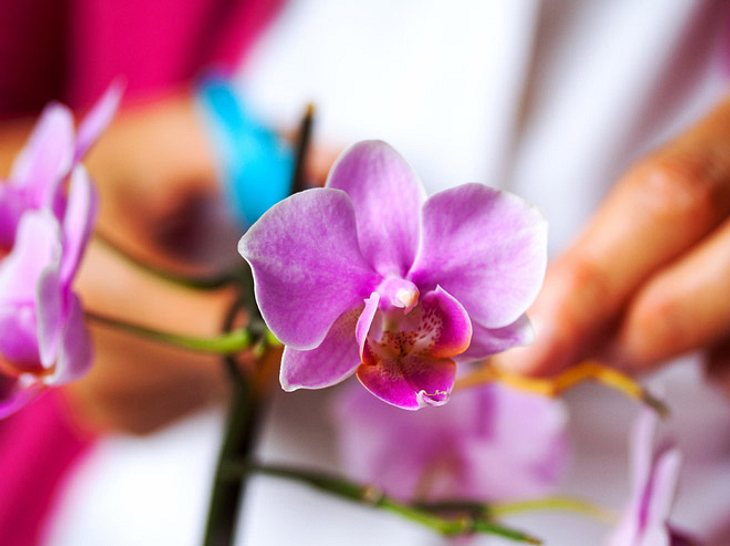 Orchideen schneiden: Die besten Tipps