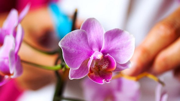 Orchideen schneiden: Die besten Tipps - Foto: justhavealook / iStock