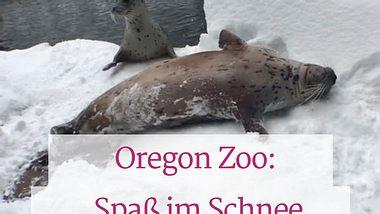 Großer Spaß: Zoo-Bewohner spielen im Schnee