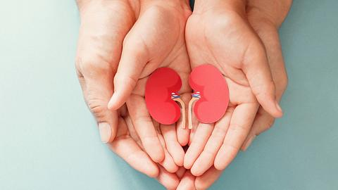 Oraganspenden sind wichtig. - Foto: ThitareeSarmkasat / iStock