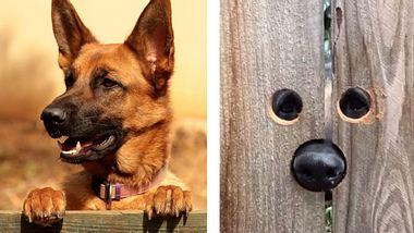 Hund bekommt Guckloch