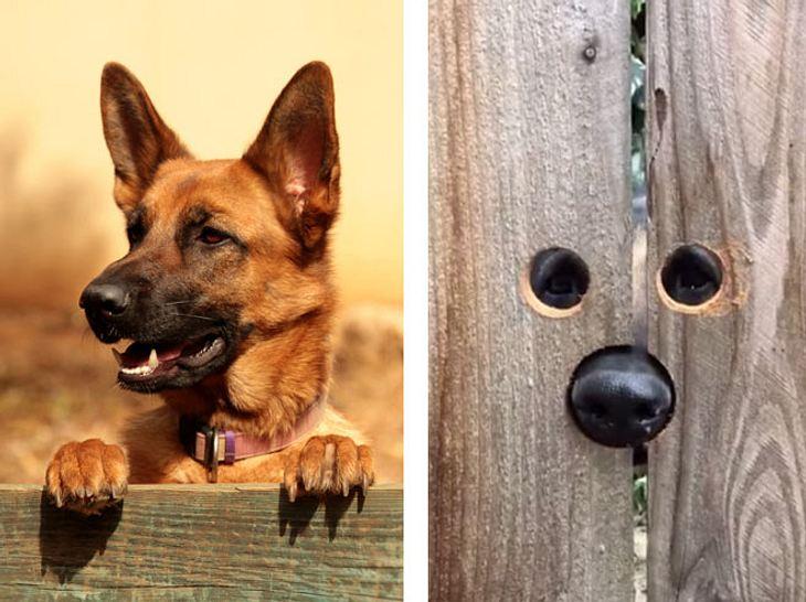 Hundefreund tut neugierigem Nachbarshund einen riesigen Gefallen