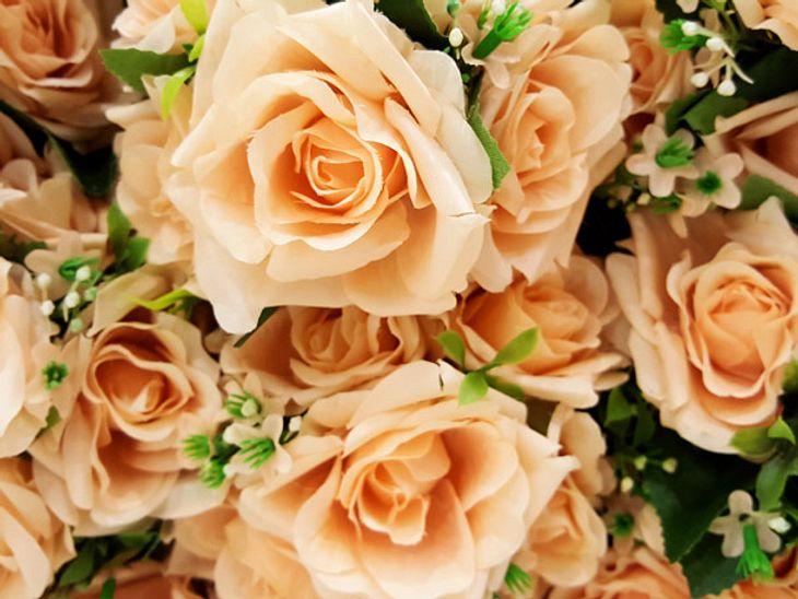 Was pfirsichfarbene Rosen aussagen | Welche Rosenfarbe hat
