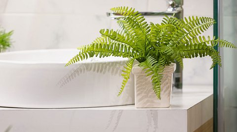 Pflanzen für das Bad
