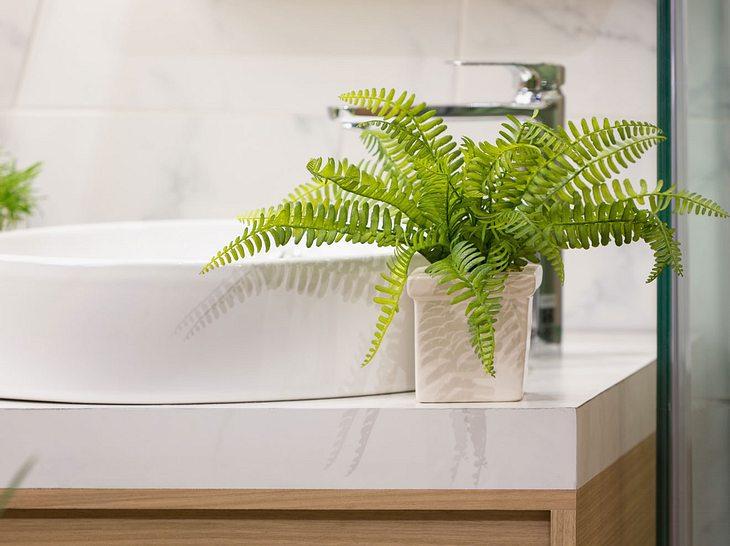 5 Pflanzen für ein grüneres Badezimmer.