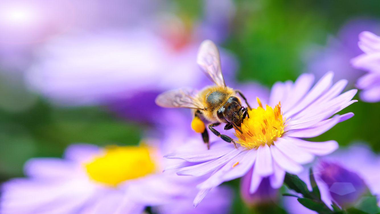 Offene Blüten sind optimale Pflanzen für Bienen.