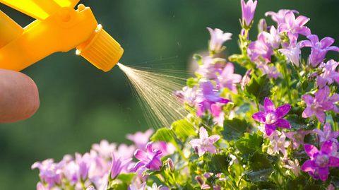 Pflanzendünger selber machen - so gehts!
