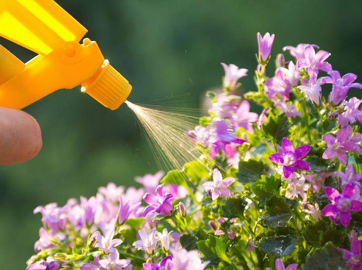 Pflanzendünger ist schnell selbst gemacht.