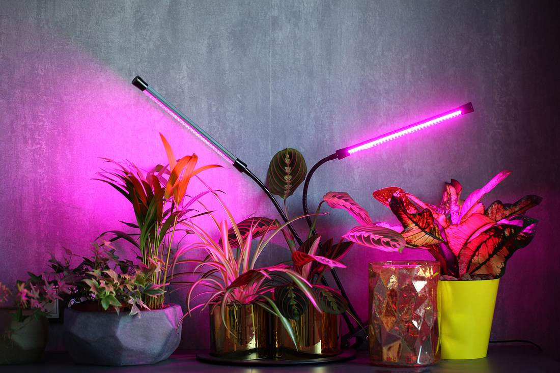 Pflanzen mit Pflanzenlampe
