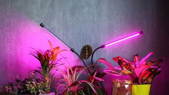 Pflanzen mit Pflanzenlampe - Foto: iStock/OlegMalyshev