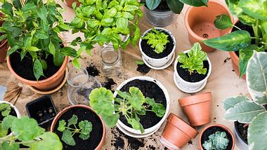 Zu Hause Pflanzen selbst ziehen - Foto: loonara/ iStock