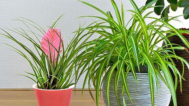 7 pflegeleichte Zimmerpflanzen