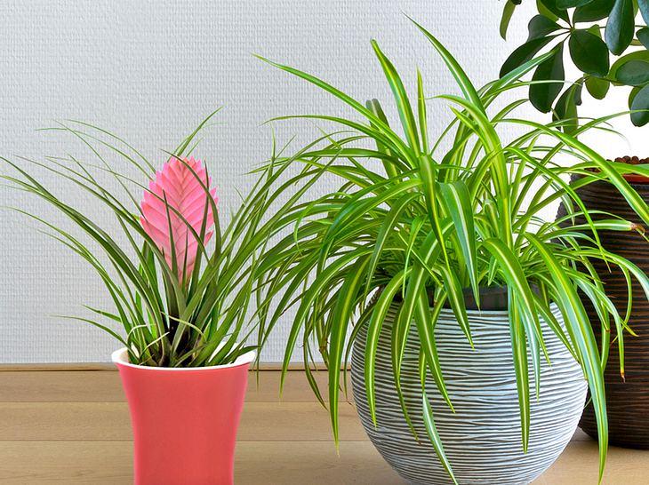 Diese pflegeleichten Zimmerpflanzen sind nicht allzu anspruchsvoll.