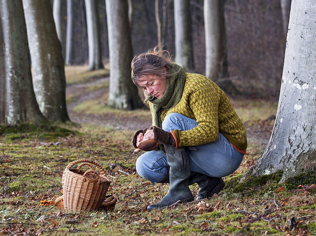 Worauf sollte ich beim Bestimmen und Sammeln von Pilzen achten?