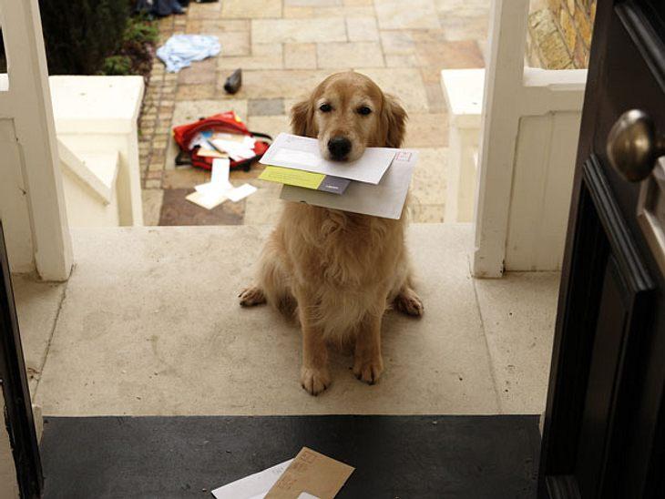 Ein besonderer Gruß vom Postboten