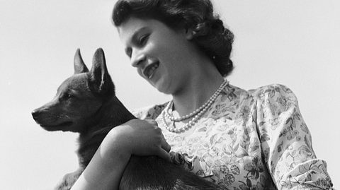 Queen Elisabeth und Corgi Susan - Foto: Lisa Sheridan / Getty Images