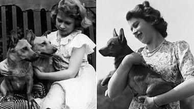 Queen Elizabeth II mit ihren Corgis in jungen Jahren - Foto: Lisa Sheridan / Freier Fotograf / Getty Images (2)
