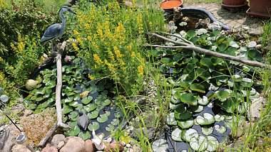 Ein Reiherschreck schützt den Teich vor Reihern - Foto: iStock/ ClaraNila