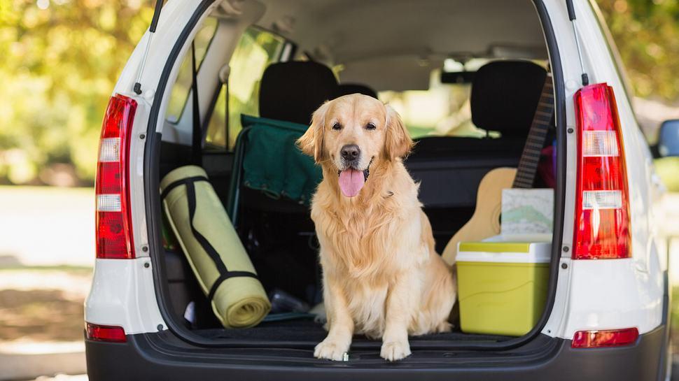 Reisen mit Hund - Foto: iStock/Wavebreakmedia