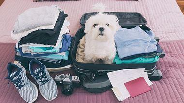Reisen mit Hund: Mit dieser Checkliste sind Sie für den Urlaub gut vorbereitet - Foto: humonia / iStock