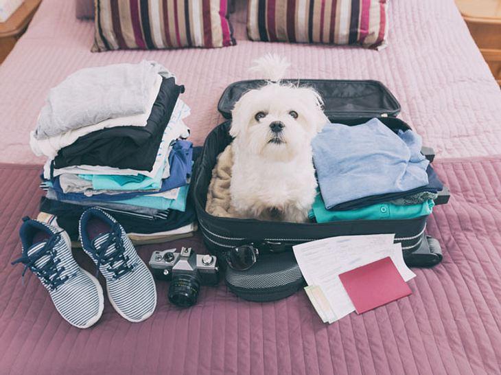 Reisen mit Hund: Mit dieser Checkliste sind Sie für den Urlaub gut vorbereitet