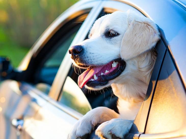 Reisen mit Hund – 10 Tipps für einen stressfreien Urlaub mit dem Haustier