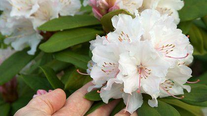 Tipps & Tricks für eine schöne Blüte