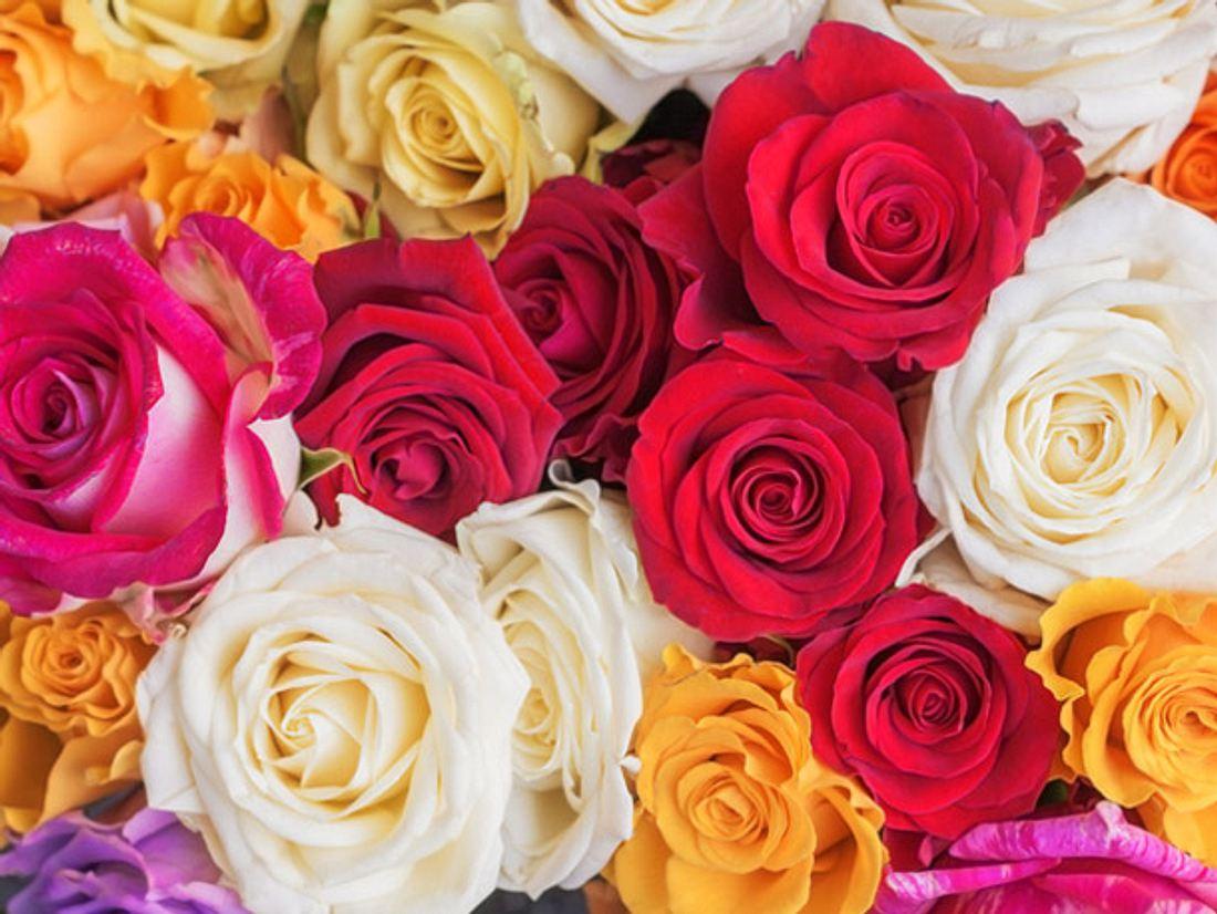Welche Rosenfarbe hat welche Bedeutung?