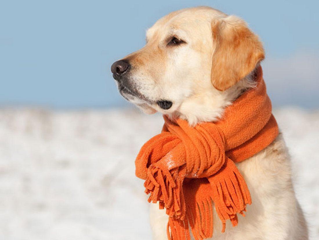 25 Varianten: einen Schal binden.