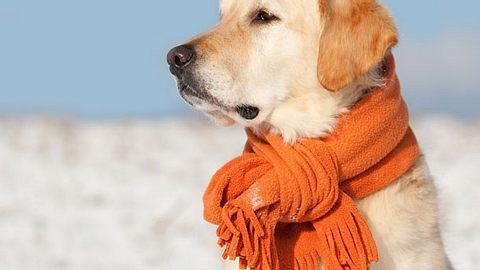 25 Varianten: einen Schal binden. - Foto: PK-Photos / iStock