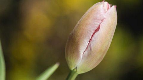 Eine Studie belegt: Scheidentrockenheit ist der Grund für wenig Sex - Foto: debraleewiseberg / iStock