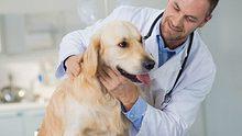 Schilddrüsenunterfunktion beim Hund: So erkennen und behandeln Sie sie - Foto: simonkr / iStock