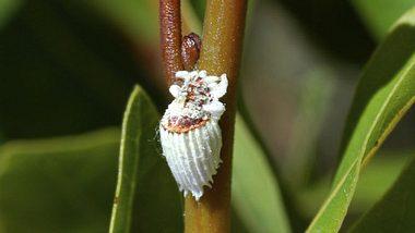 Schildläuse: 6 Fragen zum Pflanzenschädling - Foto: NNehring/ iStock