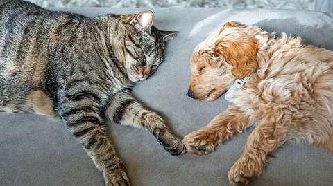 Wie Katzen und Hunde schlafen, sagt viel über deren Stimmung und Wesen aus. Welche Schlafposition nimmt ihr Tier ein? - Foto: iStock / Spiderplay