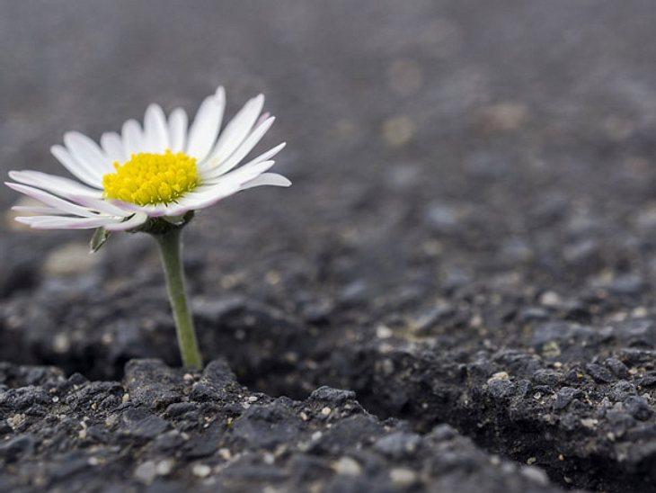 Selbstvertrauen können Sie durch innere Stärke lernen.