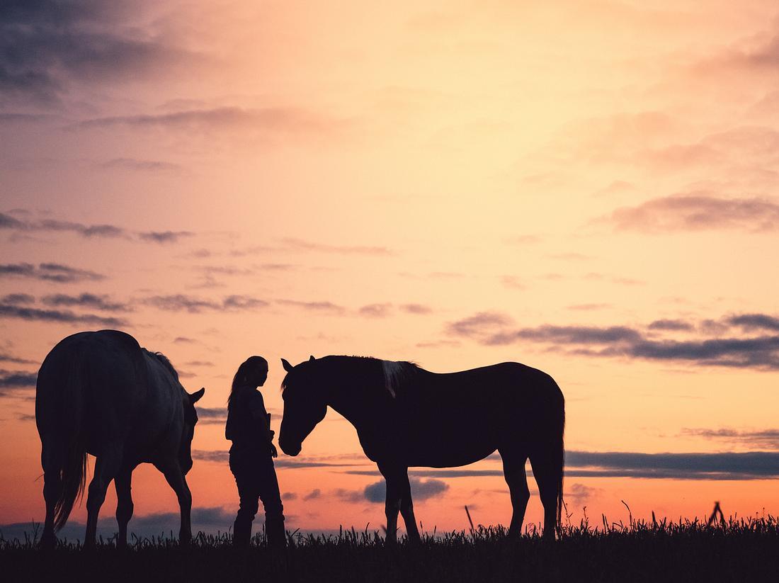 Noch einmal als letzten Wunsch ein Pferd streicheln.