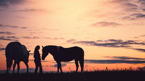 Noch einmal als letzten Wunsch ein Pferd streicheln.  - Foto: debibishopn / iStock
