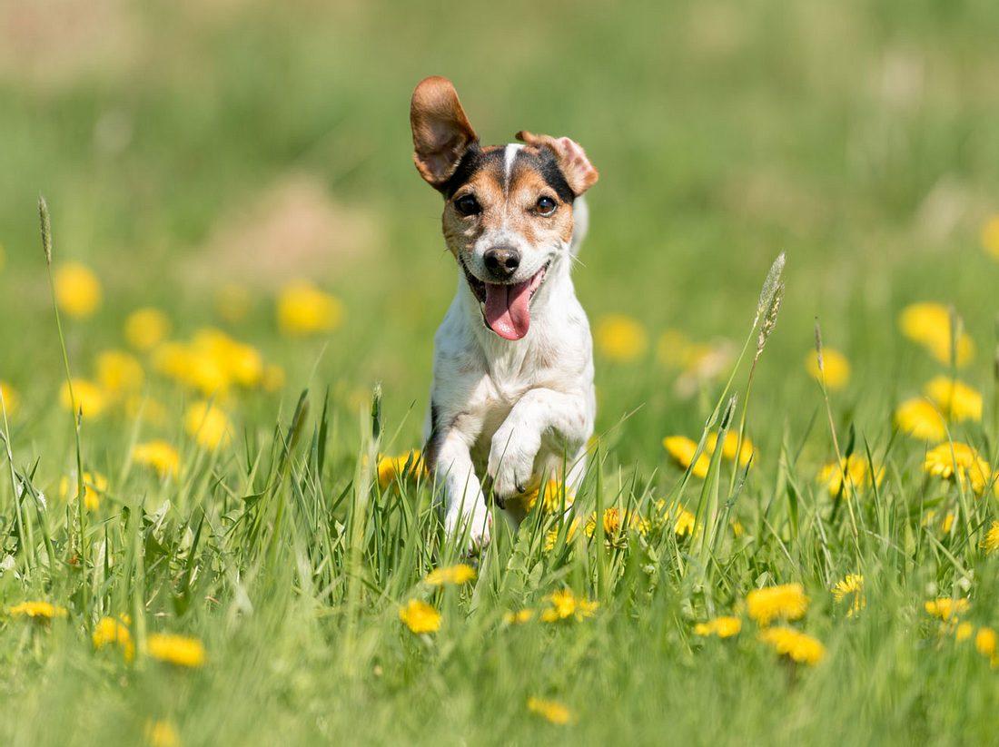 Ein Hund genießt den Sommer.