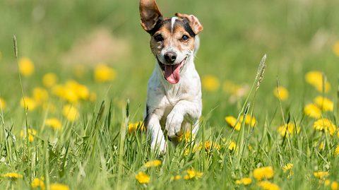 Ein Hund genießt den Sommer. - Foto: K_Thalhofer / iStock