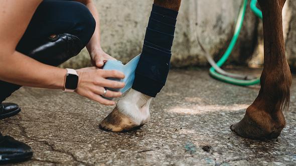 Frau verarztet Pferd mit Stallapotheke - Foto: iStock/FilippoBacci