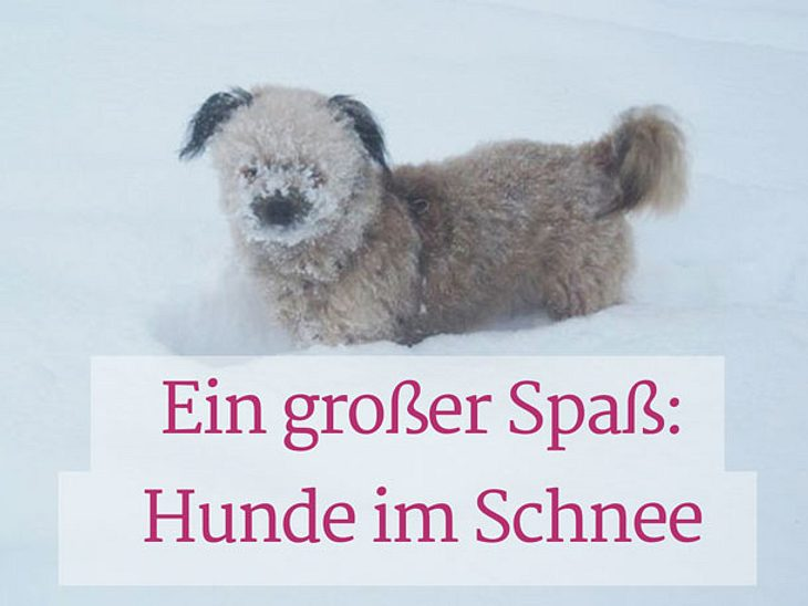 Hundewetter: Spiel und Spaß im Schnee