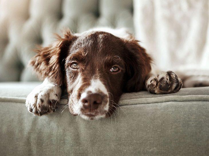 Staupe ist als Hundekrankheit bekannt.
