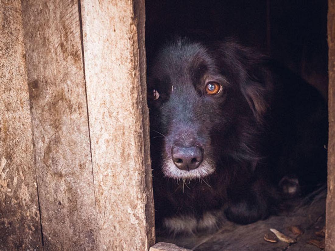 Unter der Kältewelle in der Türkei leiden auch herrenlose Hunde.