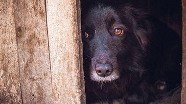 Unter der Kältewelle in der Türkei leiden auch herrenlose Hunde.  - Foto: Konoplytska / iStock