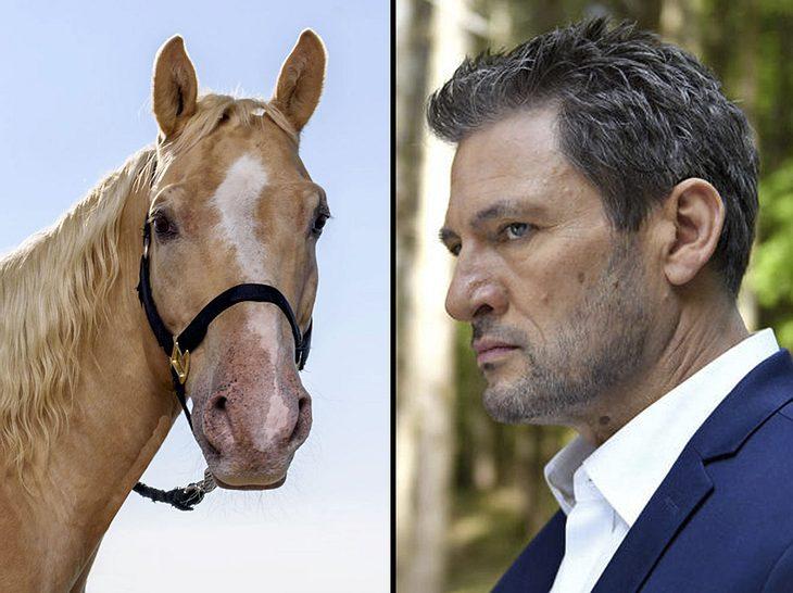 Bei Sturm der Liebe droht Pferd Taifun zum Opfer von Christophs Rachetaten zu werden.