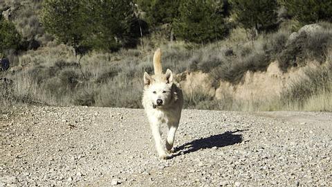 Retter in der Not: Hund findet ein ausgesetztes Baby  - Foto: fotocelia / iStock
