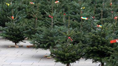 Ein Tannenbaumverkauf.  - Foto: Tverdohlib / iStock